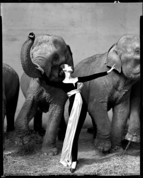 Dovima with elefants