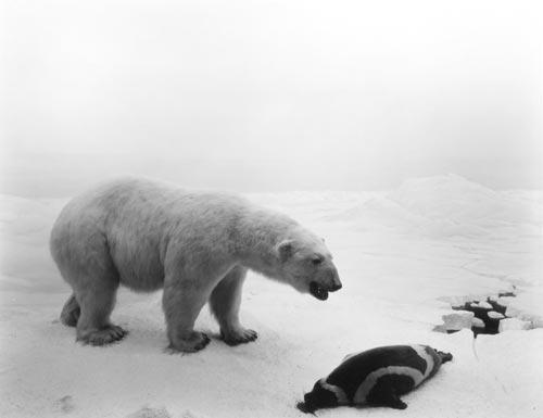 Sugimoto - polar bear