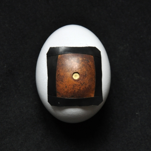 pinhole egg camera