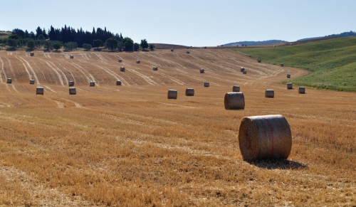 Covoni in Val d'Orcia