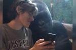 Condivisione con Gorilla